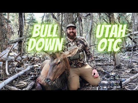 Utah Archery Elk {Bull Down}