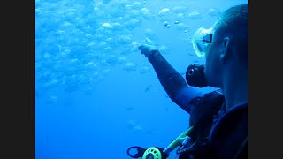 Diving With Alan Walker - Fade (Ras Mohammad 2011)