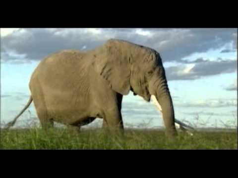 Dangerous and Big Elephants.mp4