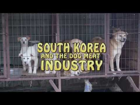 South Korean  dog meat farm industry