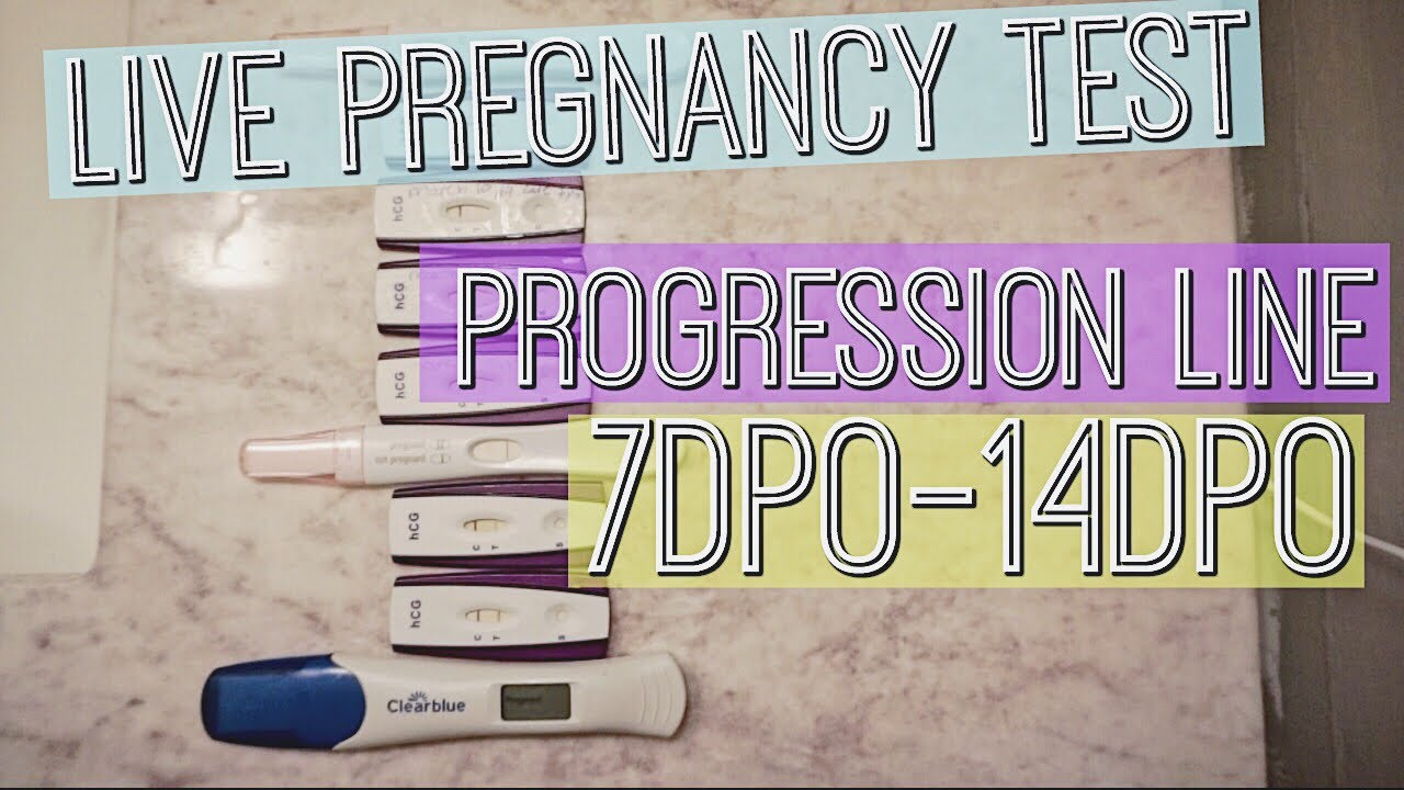 LIVE PREGNANCY TEST II LINE PROGRESSION FROM 7DPO-14DPO