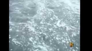Вот рыба мойва, которую ведрами черпали, в Магадане ее называют уёк