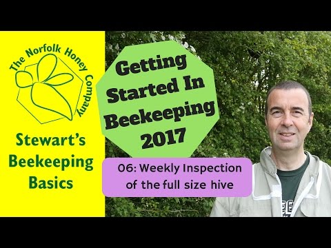My First Beehive - Weekly Inspections