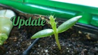 Update da Opuntia ficus-indica!