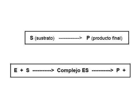 Cinetica enzimatica_Formacion del complejo enzima sustrato