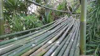 Building A Bamboo Bridge In A Fruit Forest For The Kids!!!