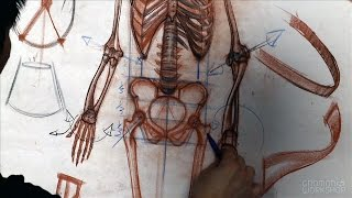 Anatomy Workshop Volume 3: Skeletal Structure, Mechanics and Proportion