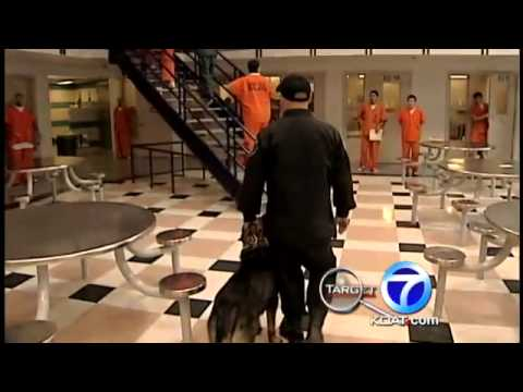 More on jail dog not owned by Bernalillo County