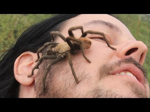 GIANT WILD TARANTULA Crawls On Face