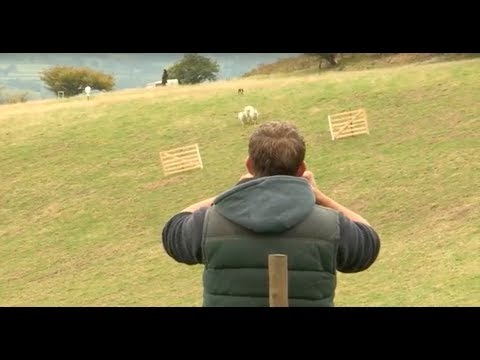 Sheepdog Trial - A Way with Dogs Episode 1