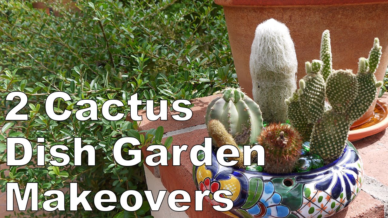 2 Cactus Dish Garden Makeovers 1 for sun 1 for shade YouTube