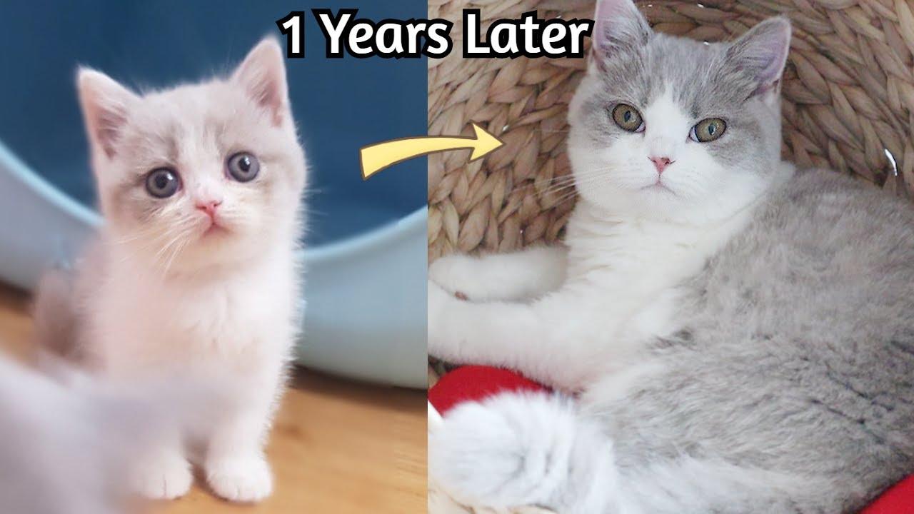 아기고양이 입양 1년 후 놀라운 변화 (성장일기)