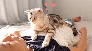 애교로 주인 잠 깨워주는 고양이 -심쿵-