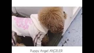 видео Спортивные костюмы для собак