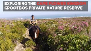 EXPLORING THE CAPE FLORAL KINGDOM   GROOTBOS PRIVATE NATURE RESERVE