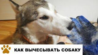 Как вычесывать собаку перчаткой для шерсти