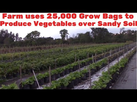 Farm uses 25,000 Grow Bags to Produce Vegetables over Sandy