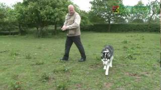 Lee Hardy - Bark Busters Dog Training Derby - Duke The Huskey Recall