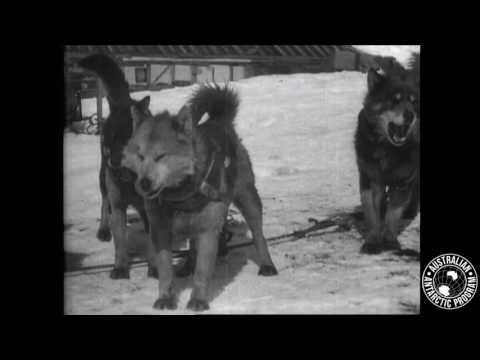 Sir Douglas Mawson's Huskies (File Footage)