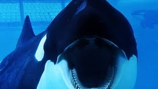 BLACKFISH | Trailer german deutsch [HD]
