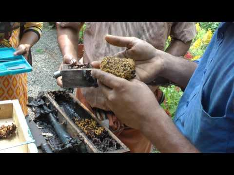 Heirloom Seed Gathering India #3 - Sting-less Bees Trip & Some Rare Organic Vegetable Varieties!