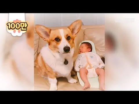 태어나보니 오빠가 웰시코기 ㅣ Mom! Are You Sure My Brother Is Welsh Corgi Dog? EP2