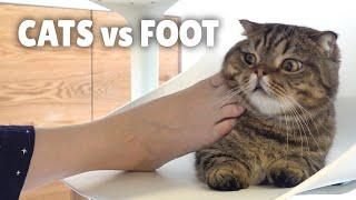 Cats vs Foot