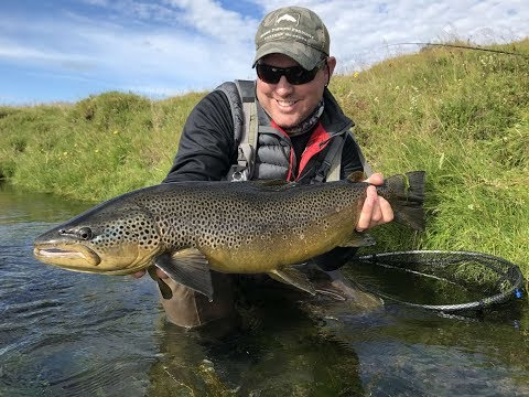 Fishing Minnivallalaekur River, Iceland. Catching huge, wild brown trout on dry fly.