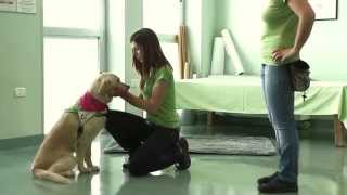 Pet Therapy - UAM Umanimalmente video di presentazione