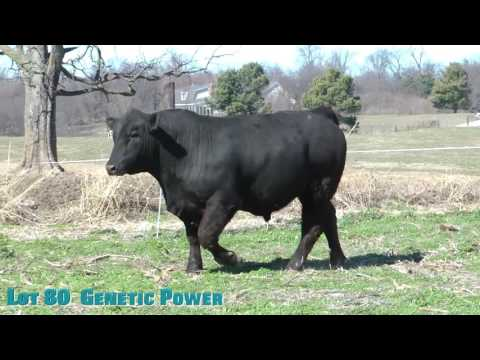 Lot 80  Genetic Power