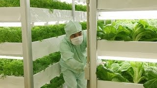 La Agricultura del Futuro...... Japón 2020