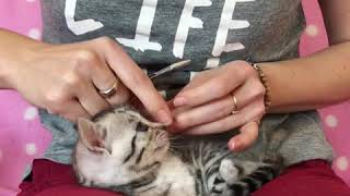 How to clip kitten nails claws