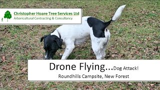 Drone Flying - Dog Attack! - Roundhills Campsite, New Forest