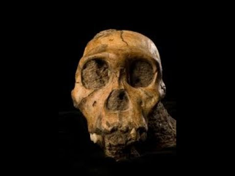Evolution Of The Human Mind & Technology of our Ancestors - Documentary