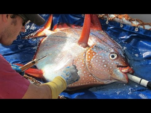 SCIENTISTS DISCOVER FIRST WARM BLOODED FISH