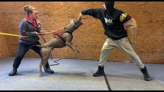 THE HULK LIFE: Hulks son almost bit me HARD during training! GOOD boy!! FULL SEND