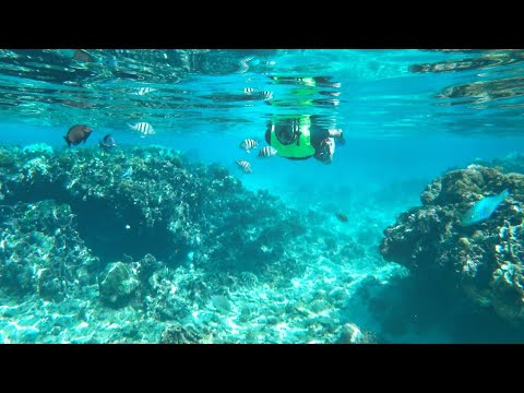 Snorkeling Amazing West Bay In Roatan Honduras (Tabyana Beach)