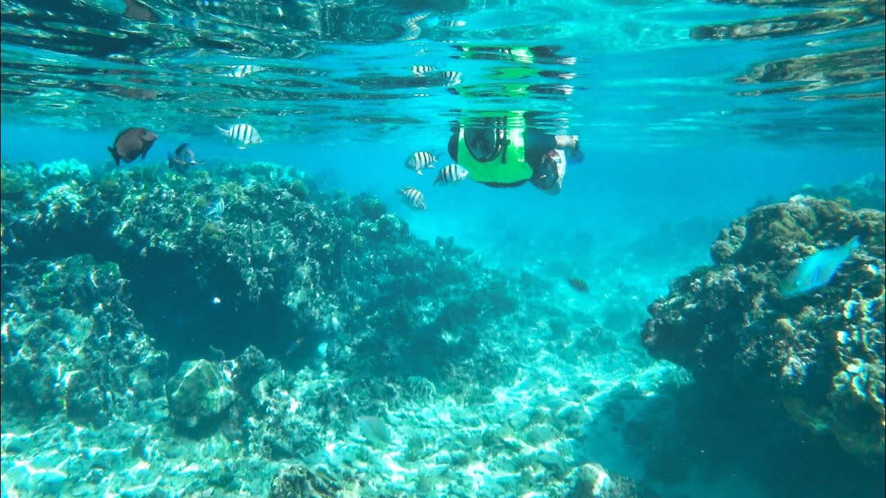 Snorkeling Amazing West Bay In Roatan Honduras Tabyana Beach