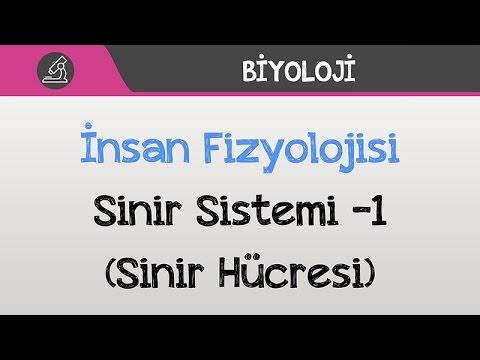 İnsan Fizyolojisi - Sinir Sistemi -1 (Sinir Hücresi)