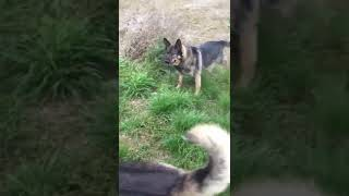 Привет из дома от Джонни!! История избитой собаки.