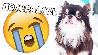 КОРОЧЕ ГОВОРЯ, ПОТЕРЯЛАСЬ ! Собака потерялась, Моя история от лица собаки