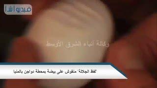 """بالفيديو :  """"لفظ الجلالة"""" منقوش على بيضة بمحطة دواجن بالمنيا"""
