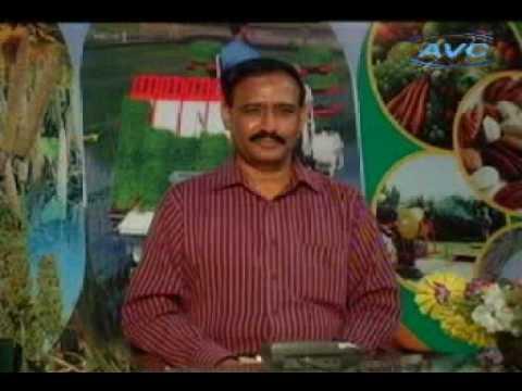Poultry Chuzon ki dekh bhal Dr. Ashraf Sahibzada