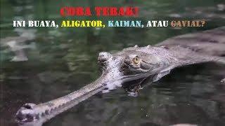 Tahu Gak Perbedaan Antara Buaya, Aligator, Caiman & Gavial?