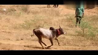 Kalai theme music- jallikattu and manjuvirattu mix video