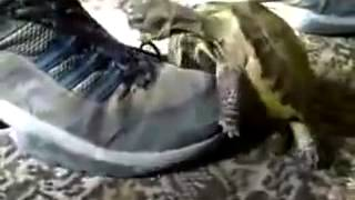 Turtle humps boot