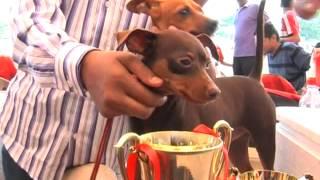 Dog Show in Pimpri Chinchwad
