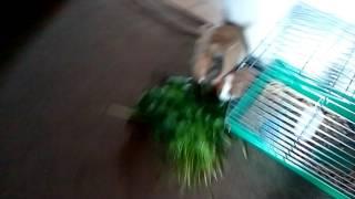 Jak zwierzęta jedzą