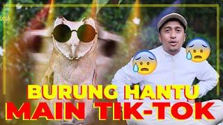 PENGHUNI BARU RUMAH JOGLO, BURUNG HANTU...!