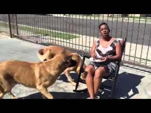 Auntie Fee Out Side With the Dogs